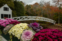 Somesville Bridge with Fall Flowers